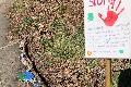 """Kindertagesstätte Zauberwald: """"Steinschlange"""" gegen Corona"""