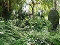 Der Friedhof soll auch ein Ort des Lebens sein