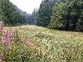 Orchideen- und Artenreichtum im Birkenbachtal: Untere Naturschutzbehörde erläutert Maßnahmen
