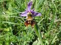 SGD Nord: Orchideenblüte in den Naturschutzgebieten