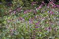 Invasive Neophyten - das Ende der heimischen Pflanzenvielfalt?