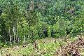 Bendorfer Wald im Klimawandel