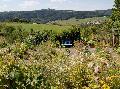 Waldbreitbacher Klostergarten: Kräuterwanderungen im Juli