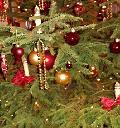 Kostenlose Abholung der Weihnachtsb�ume durch AWB
