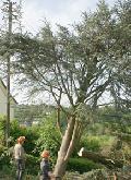 Sind Baumf�llungen zul�ssig oder nicht?