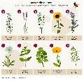 Welttag der Biene: zehn insektenfreundliche Pflanzen