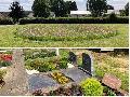 Blütenpracht auf dem Friedhof in Pracht