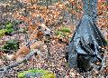 Rettungshundestaffel Westerwald: Pr�fung abgelegt