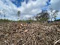 Baumpflanzaktion in Caaner Gemarkung