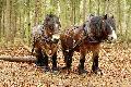 Sanfte Technik und Pferde helfen Wald im Klimawandel
