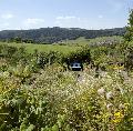Klostergarten: Seminar und Kräuterwanderung im Mai