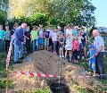 Ein Eisenholzbaum f�r Katzwinkel � Gemeinderat ehrte Kommunalpolitiker