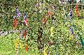 Traditionen in Corona-Zeiten: Maibaumstellen nur eingeschränkt möglich
