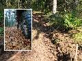 Forstrevier Katzwinkel: Mit Vollgas durch den Wald - ohne Rücksicht auf Verluste