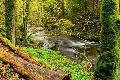 Naturschutzinitiative warnt vor Gifteinsatz im Brexbachtal