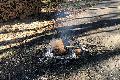 Lagerfeuer im Wald bei Hilgert entfacht