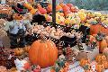 Oktobermarkt Horhausen nur am Sonntag