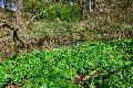 NI widerlegt Zweifel an Vogelgutachten für Rothenbachaue Hattert