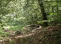 Geführte Tour durch den Friedwald Wildenburger Land