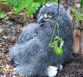 Sympathische Federknäuel: Küken im Zoo Neuwied
