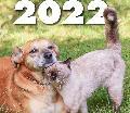 Tiere im Glück – Der neue Kalender für 2022 ist da