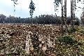Bundeswaldprämie an VG Bad Marienberg für nachhaltige Wiederbewaldung