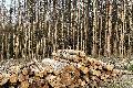 Wald in Waldbreitbach in verheerendem Zustand
