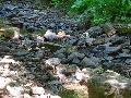 Bürgerinitiative sieht die Trinkwasserversorgung in Gefahr