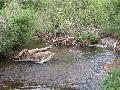 Lebendige Gewässer erhalten und weiterentwickeln