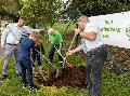 Westerwaldverein: Baum des Jahres in Bad Marienberg gepflanzt