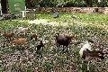 Bürgerpark ist neues Zuhause der Ziegen des Kindergartens