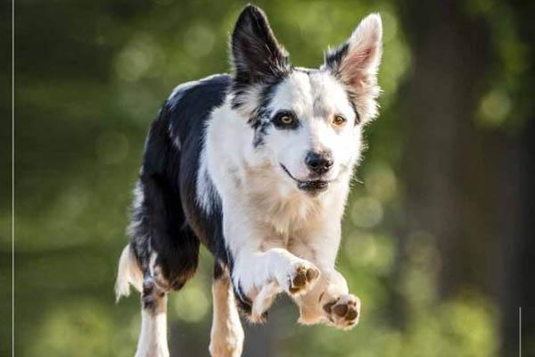 Das Titelbild des Tier-Kalenders 2021. Foto Tierschutz Siebengebirge