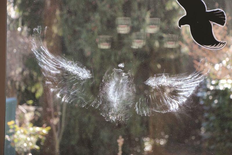 Vogelabdruck neben Silhouette. Bildautor: Niko Eppner