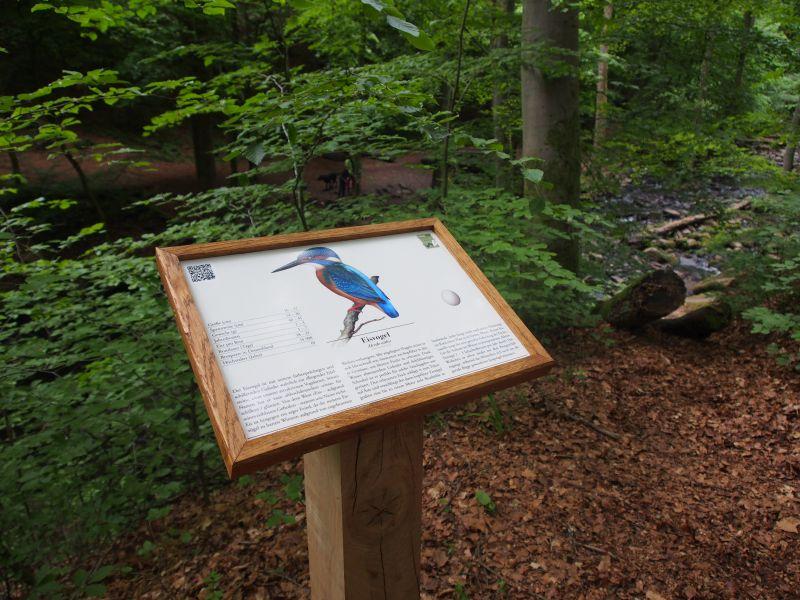 """Vogelschilder in der Holzbachschlucht: Einweihung eines """"mega coolen"""" Themenwegs"""