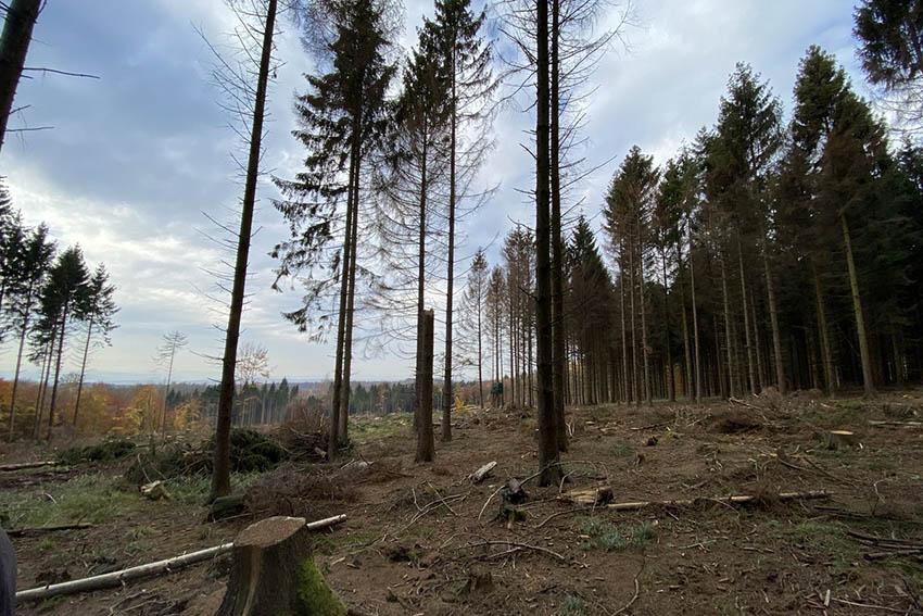 Ellen Demuth ruft um Hilfe für den Wald