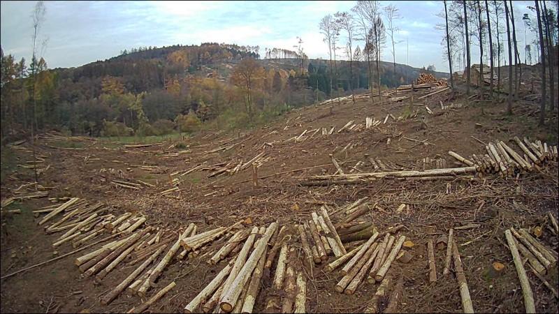 """Waldzustandsbericht: """"Treibhausgase zerstören unsere Wälder"""""""