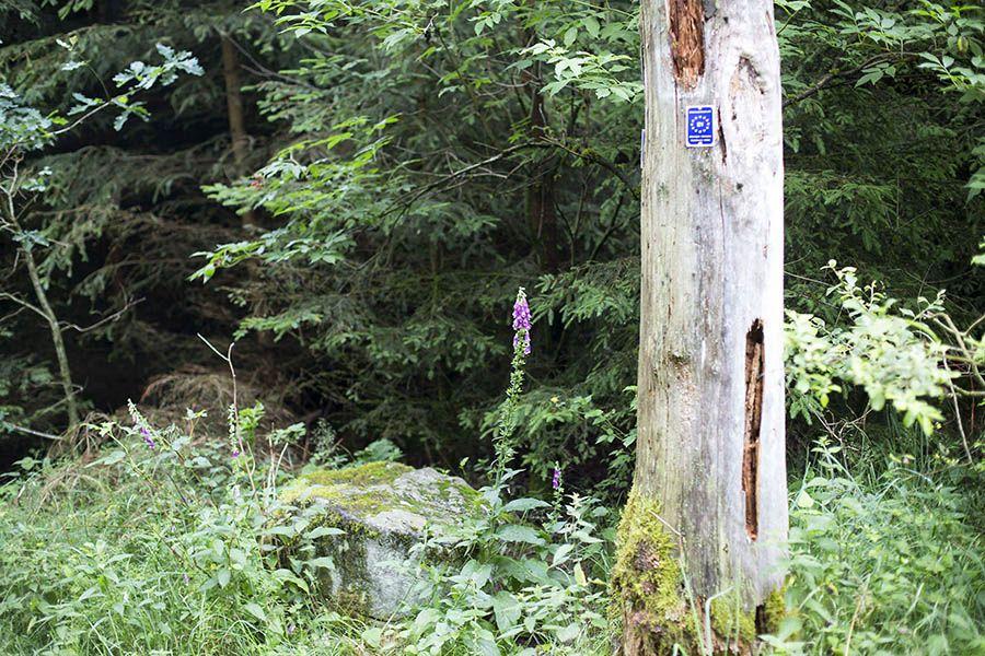 Kostenfrei geführte Wanderung mit Start in Sessenbach
