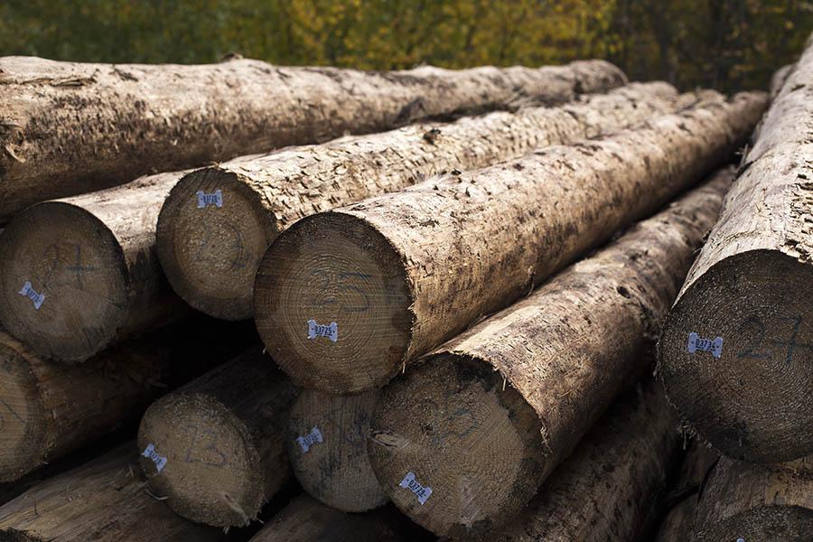 Die Holzwirtschaft nimmt zum Holzmarkt Stellung