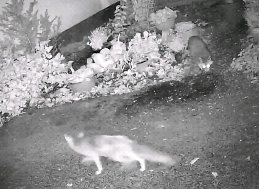 Die Überwachungskamera von Ronja H. hat dieses Bild aufgenommen.