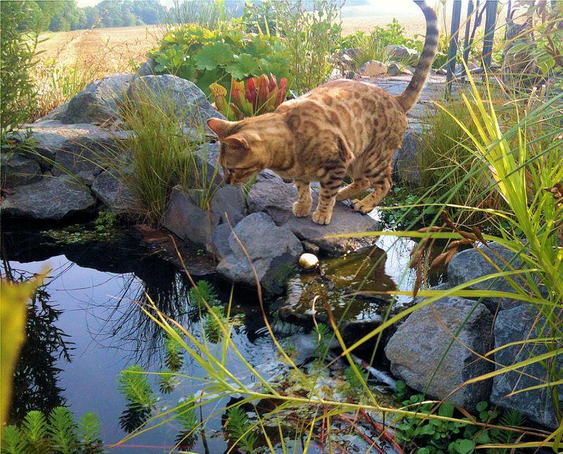 BUND Gartentipp Juli: Wasserstellen beleben unsere Gärten ...
