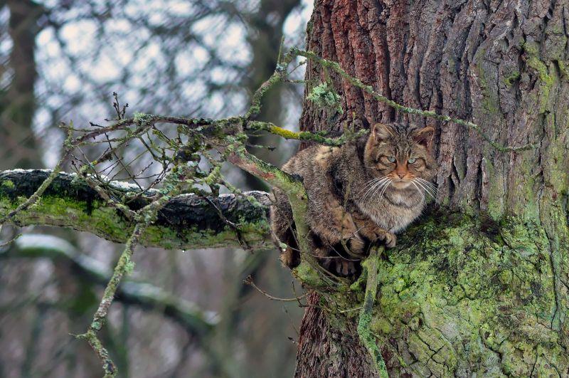 """Winterwanderung durch den Wildpark """"Tiergarten Weilburg"""""""
