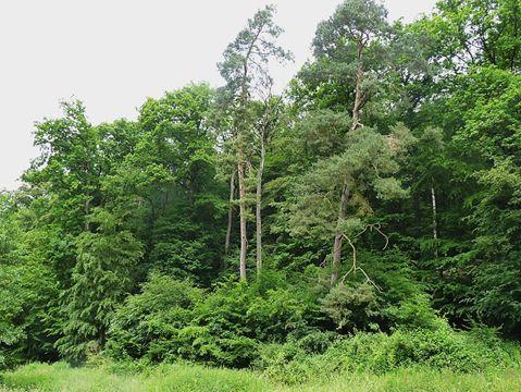 Wildnis in Deutschlands Wäldern – Molsberger Gespräche