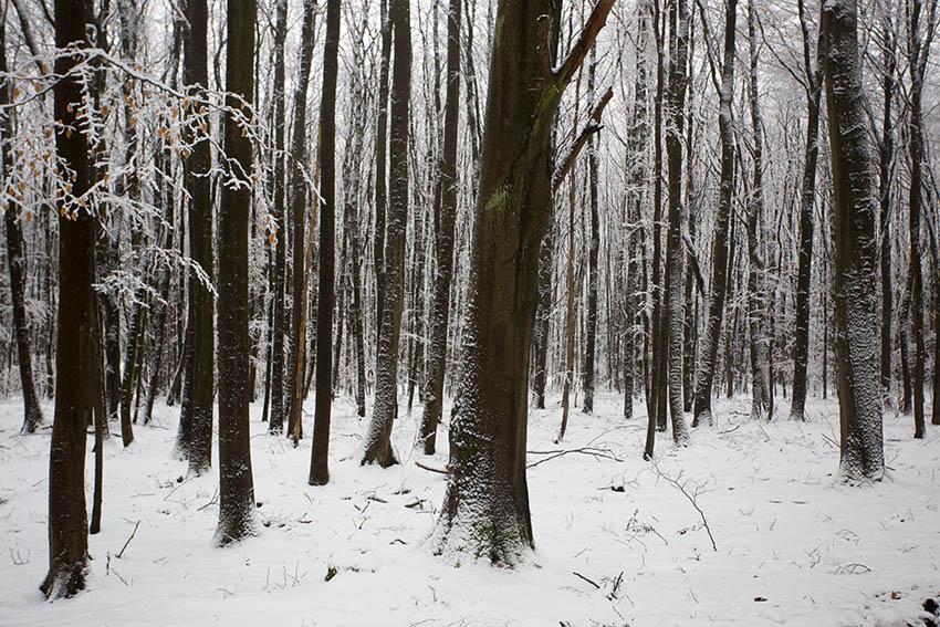 Weiße Winterlandschaft über Nacht