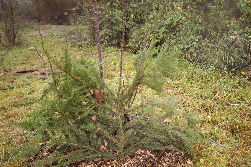 BUND Gartentipp Dezember: Winterschutz installieren