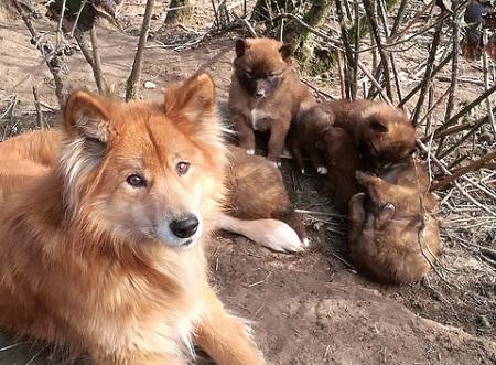Internationale Wissenschaftlerin zu Gast bei Wolfswinkeler Hundetagen