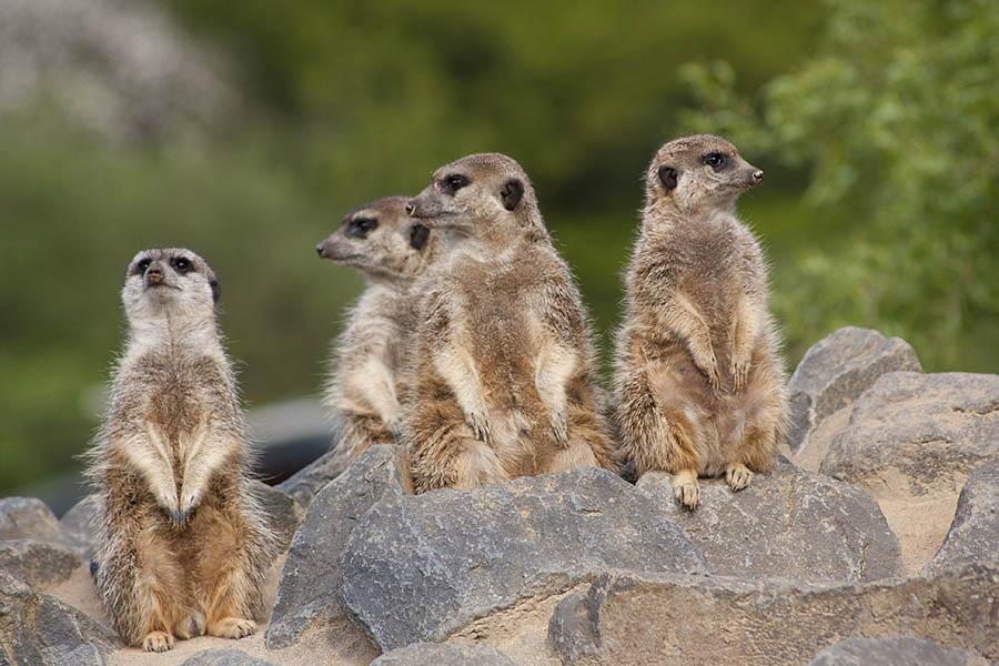 Ellen Demuth fragt: Wo bleiben die Hilfen für den Zoo Neuwied
