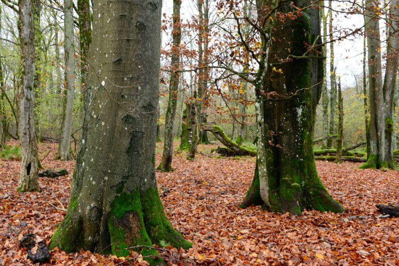Naturschützer erleben Waldwildnis im Naturerbe Stegskopf