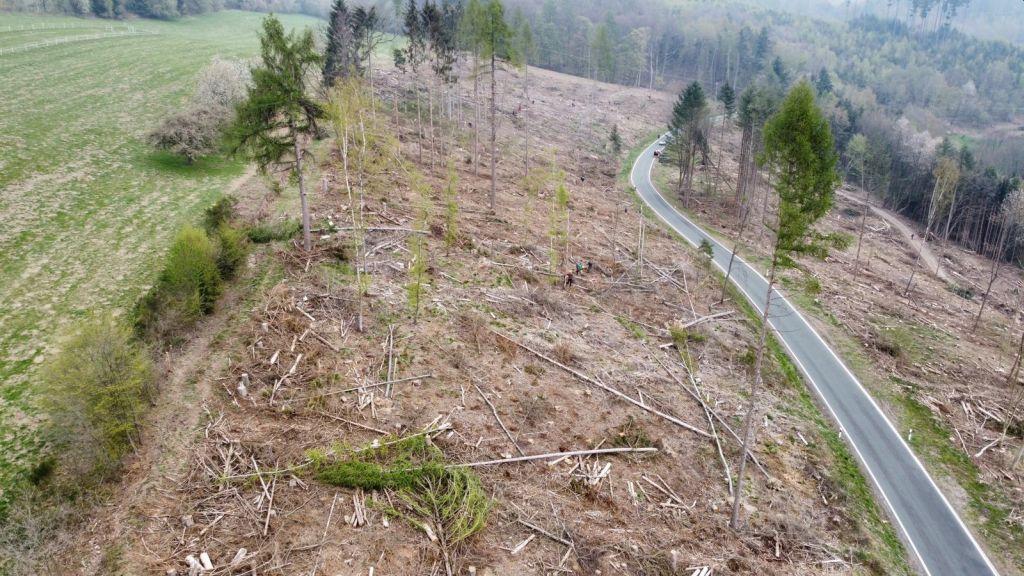 3000 Bäume für einen neuen Wald