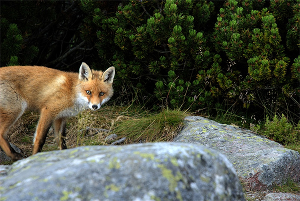 Die Jagd - nicht nur ein Hobby, sondern auch von wirtschaftlicher und ökologischer Bedeutung