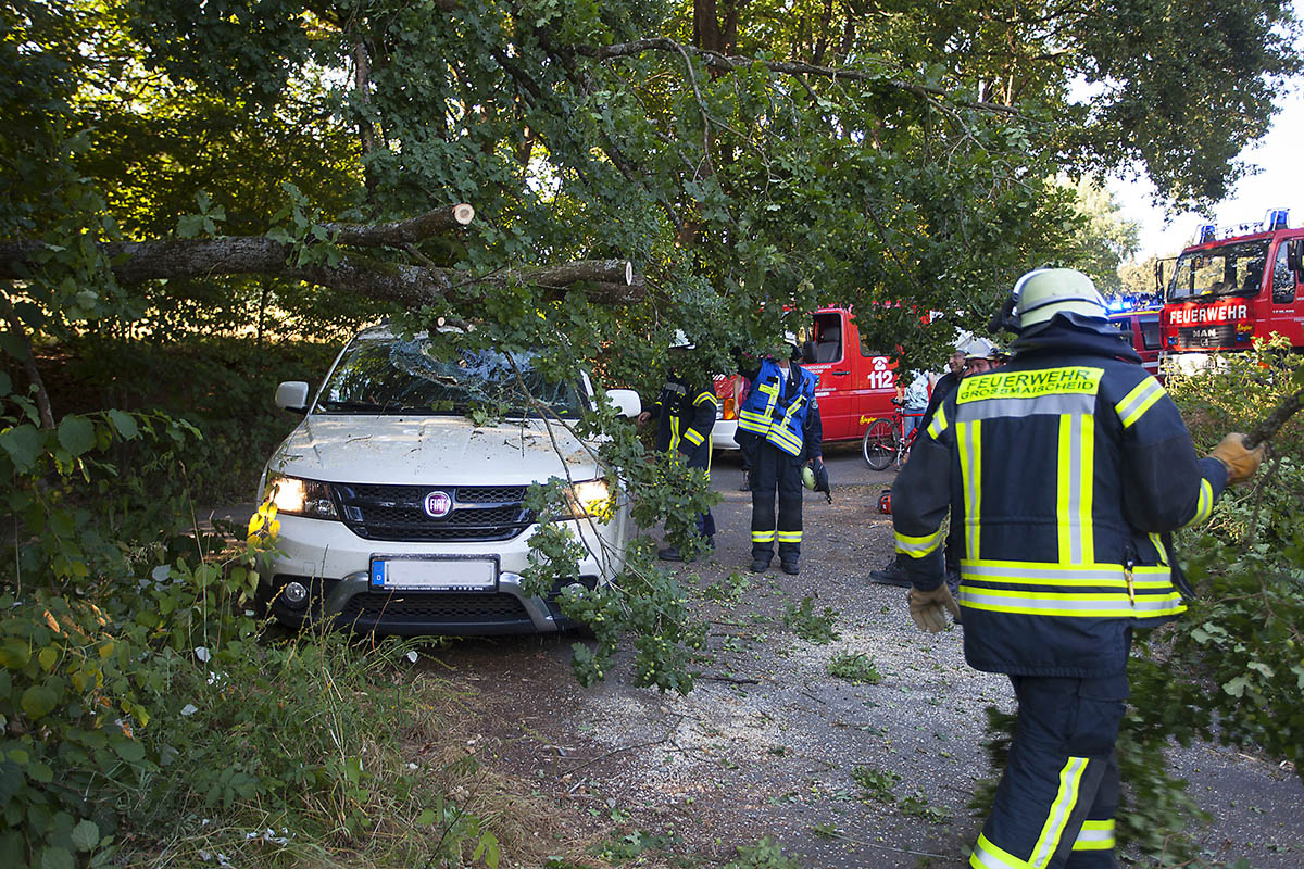 Da die Bäume schon teils belaubt sind besteht die Gefahr von Windbruch. Symbolfoto
